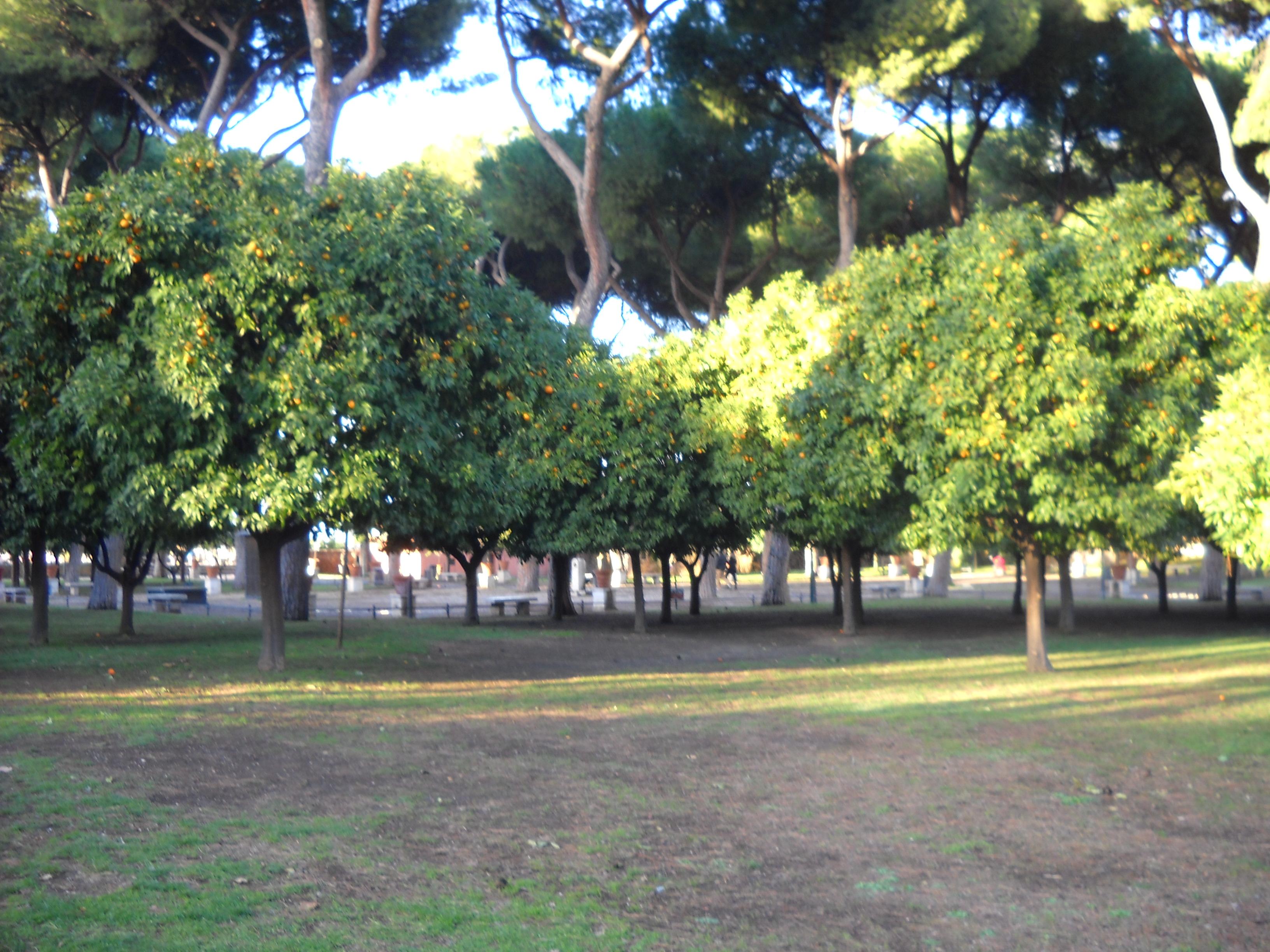 Osvaldo indirettamente caterina e il giardino degli aranci foto di mariagrazia veneziano - Giardino degli aranci frattamaggiore ...