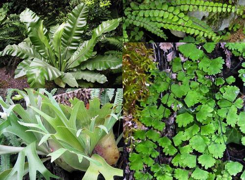 Disciplina della biologia che studia le forme di vita del - La felce pianta ...