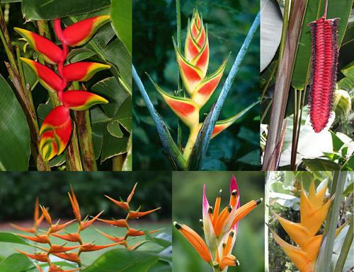 Piante rare e preziose terza parte for Piante da giardino tropicali
