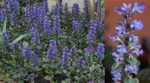 Le ricorrenze delle piante for Piante da sottobosco