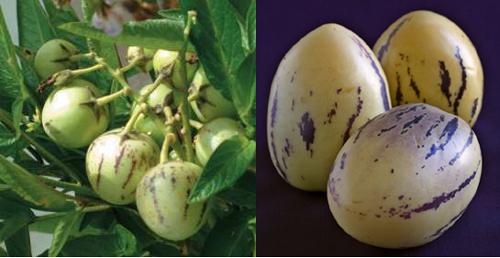 Piante A Cespuglio Da Giardino : Piante e frutti tropicali in italia